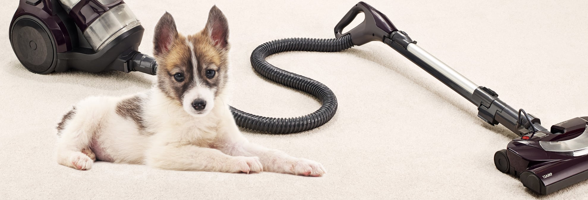 A dog sitting next to a vacuum cleaner