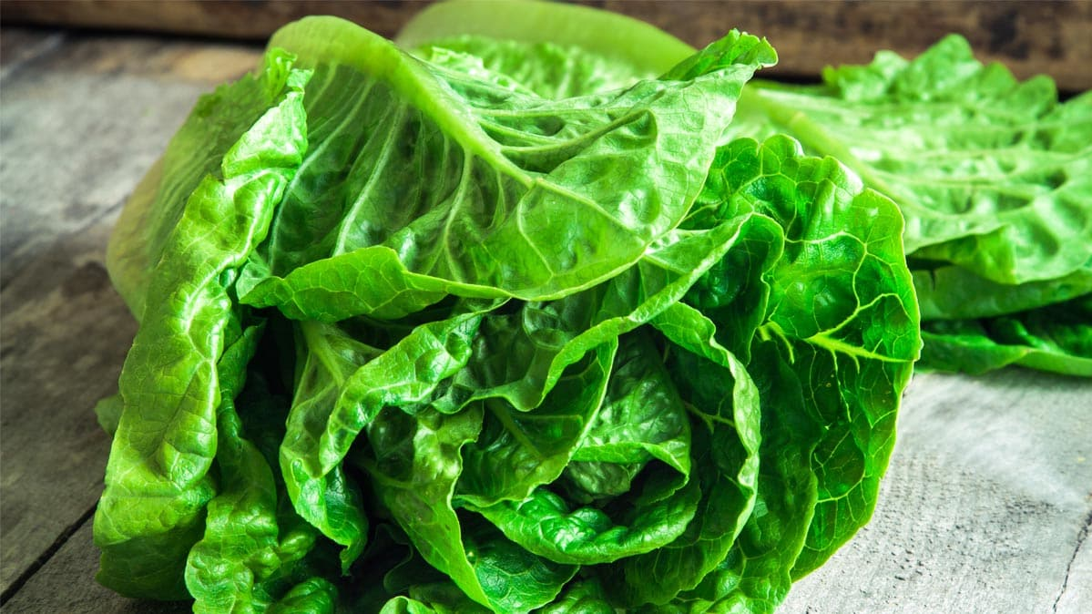 Romaine lettuce has sickened dozens in a recent E. coli outbreak. Pictured: romaine lettuce