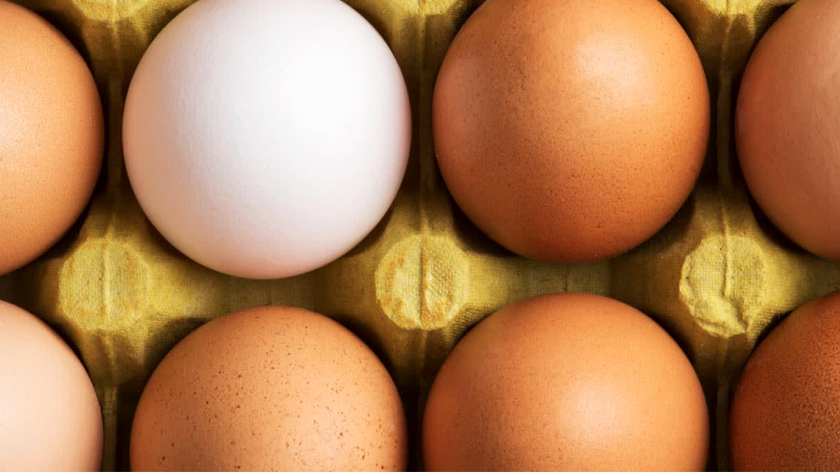 Are Eggs Good for You?