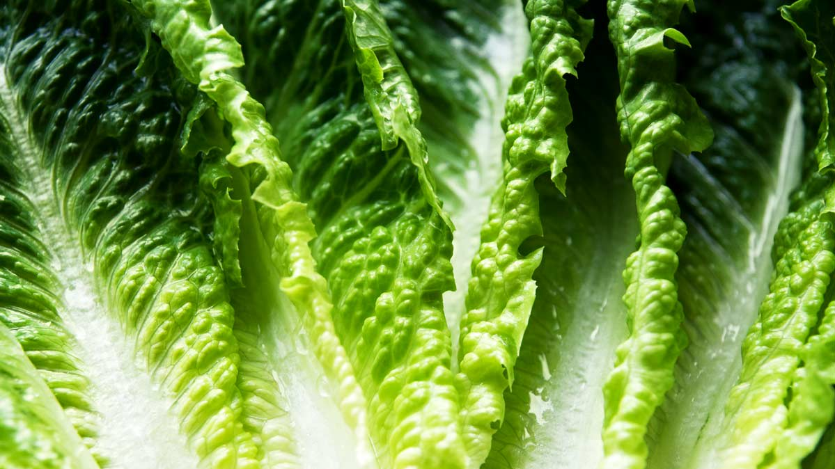 Romaine lettuce has again been implicated in an E. coli outbreak.