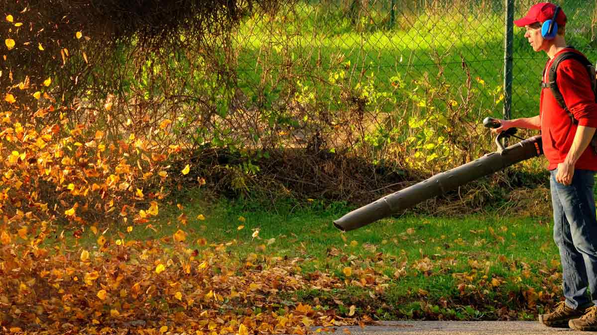 the lawn gear you need for fall cleanup - consumer reports