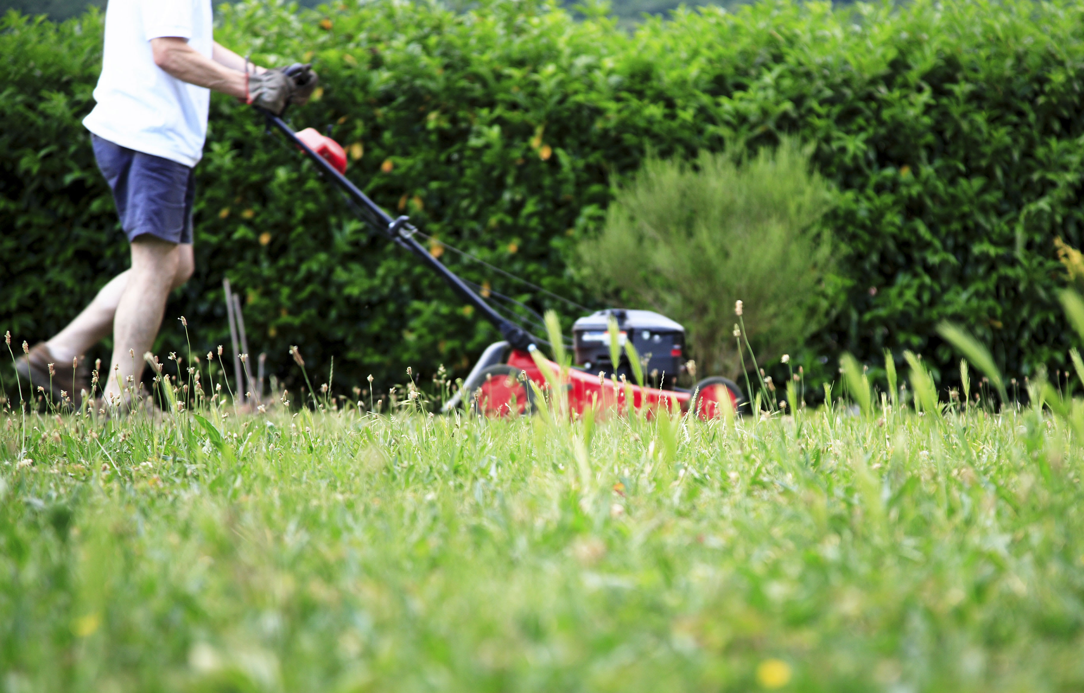 Best And Worst Walk Behind Lawn Mowers Consumer Reports