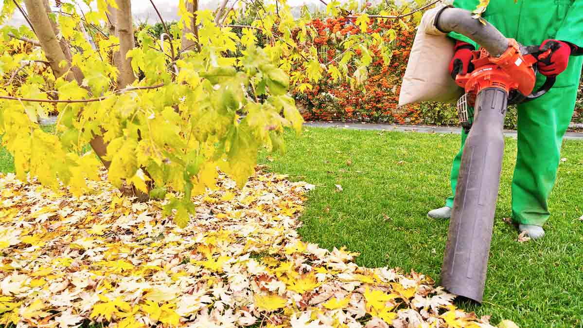 Do You Really Need A Leaf Blower Vacuum Consumer Reports