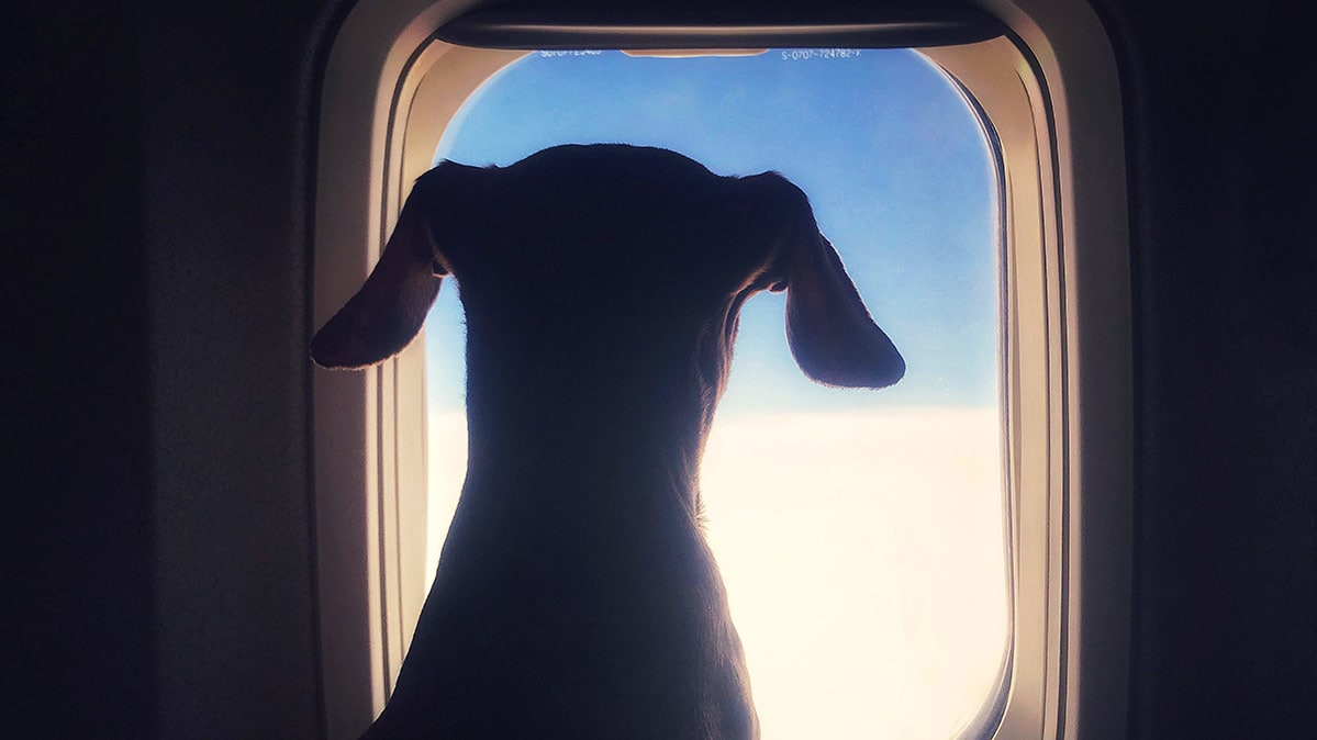 The New Rules of Flying With Your Pet