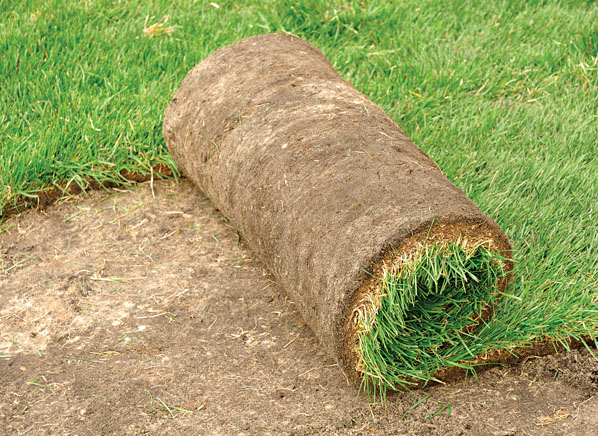Image Result For How To Fertilize My Lawn