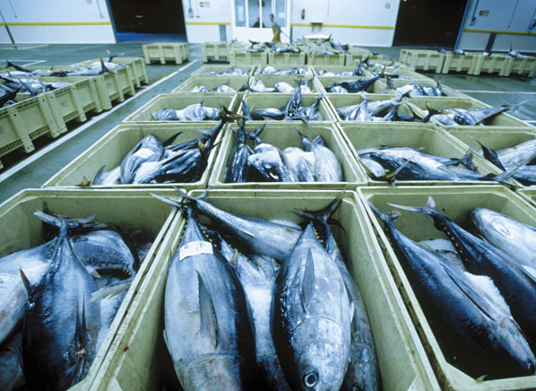 Low mercury and high mercury fishes consumer reports for Cod fish mercury