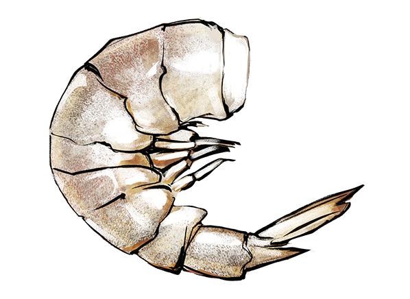 white shrimp