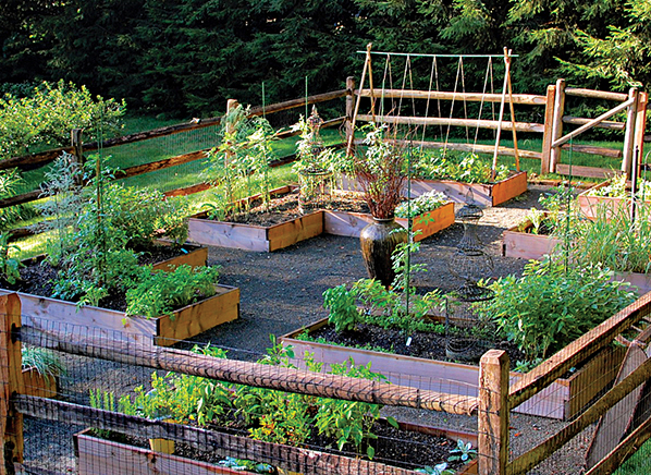 yard to table garden