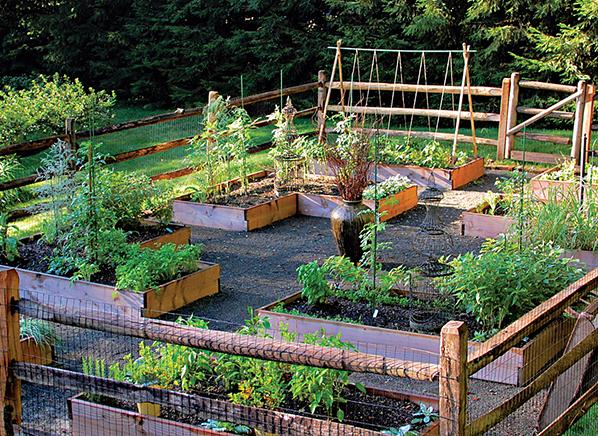 yard to table garden