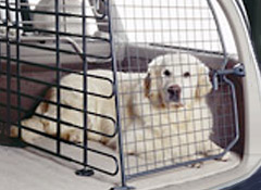 Pets and Car Safety | Driving with Pets - Consumer Reports