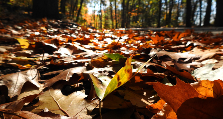 This is an image of fall leaves in a forest