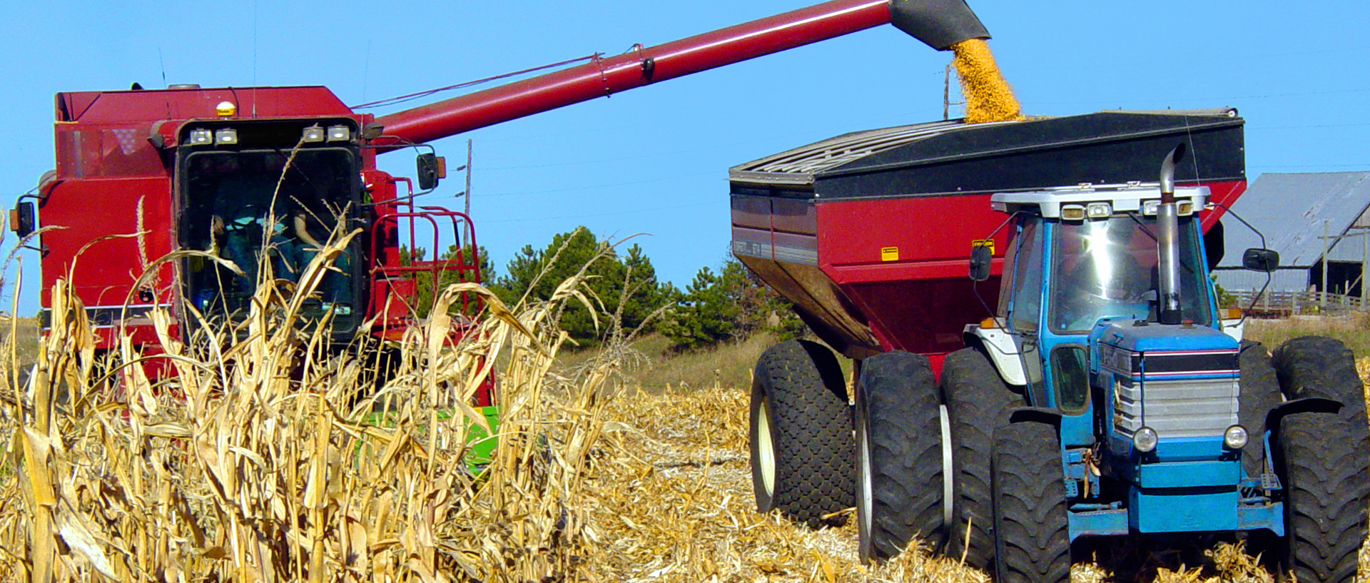 Scientists Raise Concerns Over Weed Killer Glyphosate in New Study
