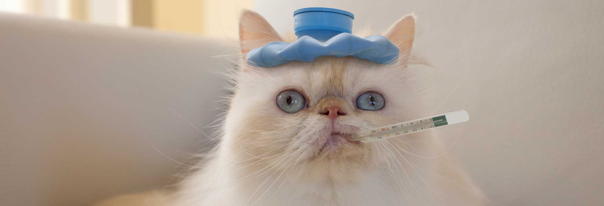 Why the cat sneezes Find out 35