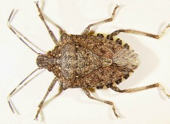 How To Keep Stink Bugs Out Of Your House Consumer Reports