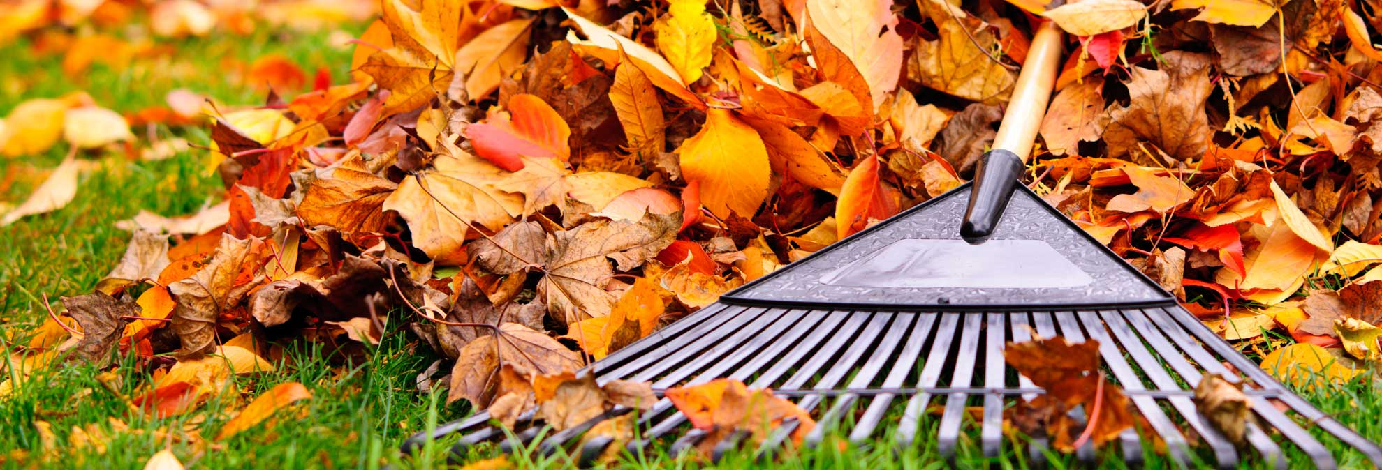 3 Winning Strategies For Fall Leaf Removal Consumer Reports