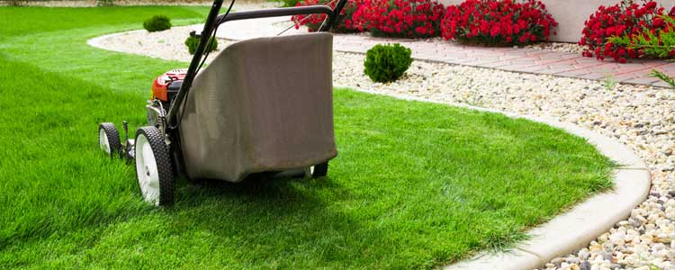 Improve your landscape by not cutting the grass too short.