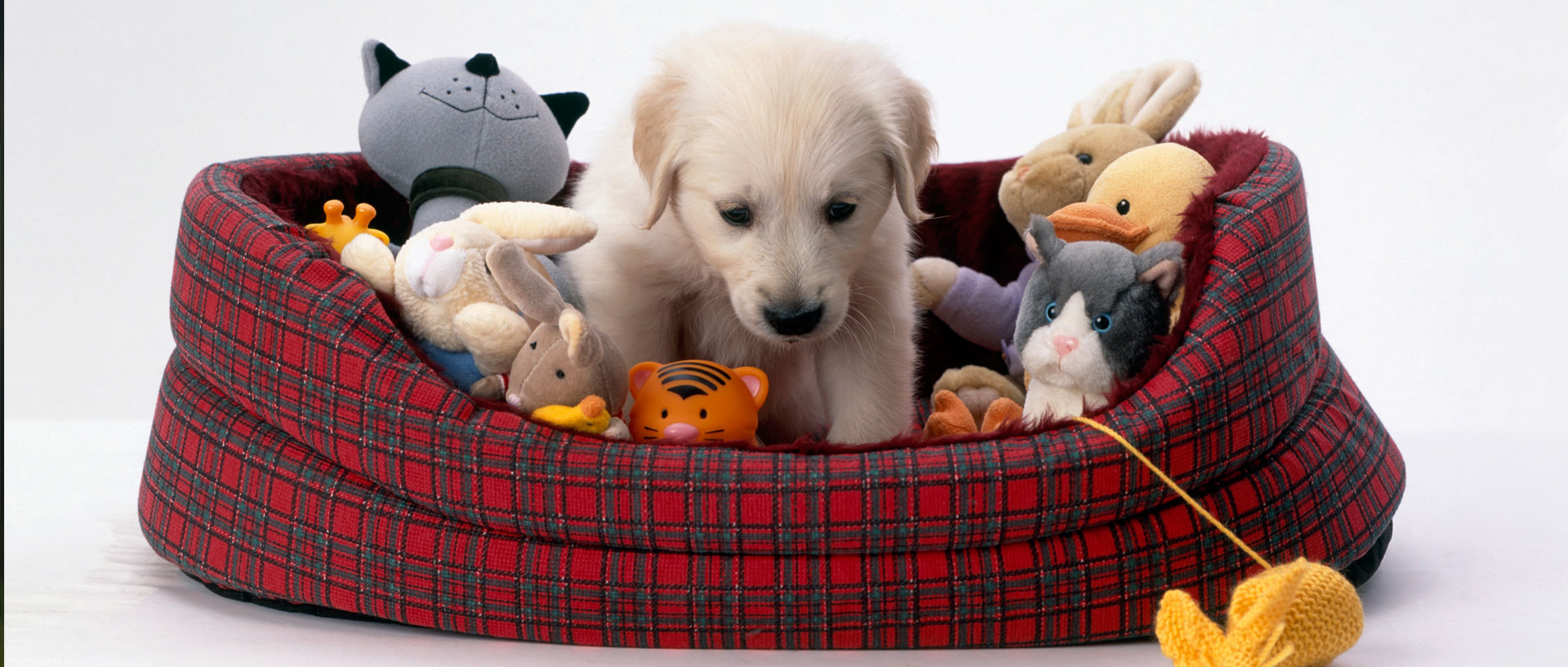 Best Dog Toys : How to pick the best toys for your dog consumer reports
