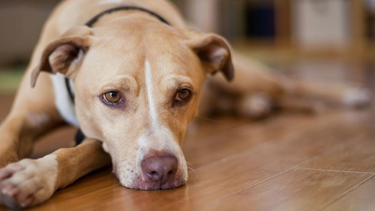 8 Toxic Foods for Dogs