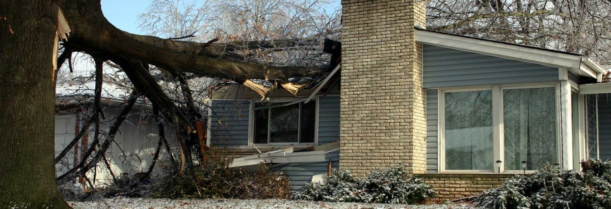 When A Tree Falls On Your House, You Want One Of The Best Homeowners  Insurance