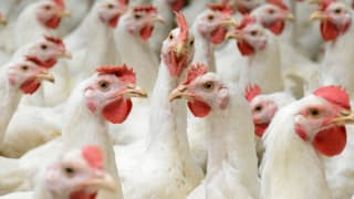 What 'No Antibiotics' Claims Really Mean - Consumer Reports