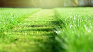 How to Assess a Lawn Care Service - Consumer Reports