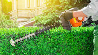 How to Fix the 5 Most Common Lawn Problems - Consumer Reports