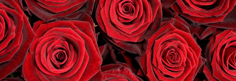 Roses that are part of a Valentine's Day flower delivery