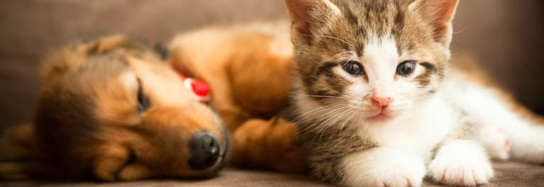 Pet allergies don't have to ruin your holidays.