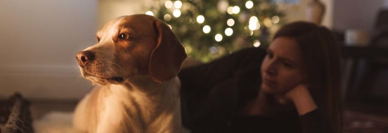 Keep your pet safe: A dog and a Christmas tree.