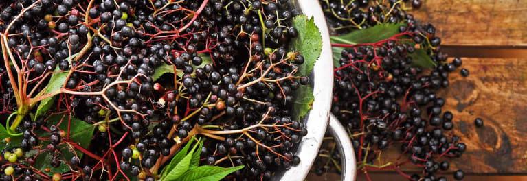 Image result for black elderberry in hands
