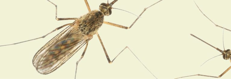 Learn which tick and mosquito diseases to watch this year.
