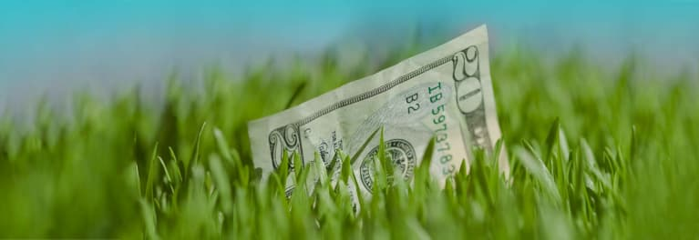 A $20 bill in the grass, a kind of found money