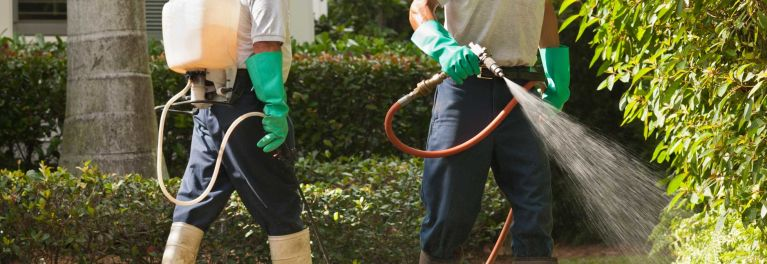 Should You Spray Your Yard for Mosquitoes and Ticks ...
